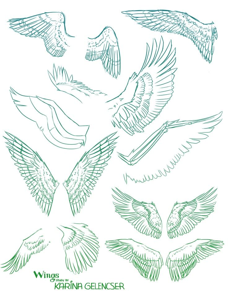 Harpy Wing Reference - Mythical Creatures, Fantasy, Art