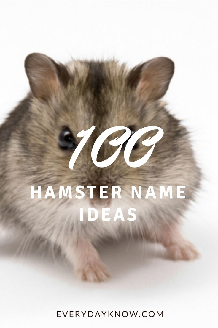 100 Hamster Name Ideas With Images Hamster Names Cute Hamster Names Hamster