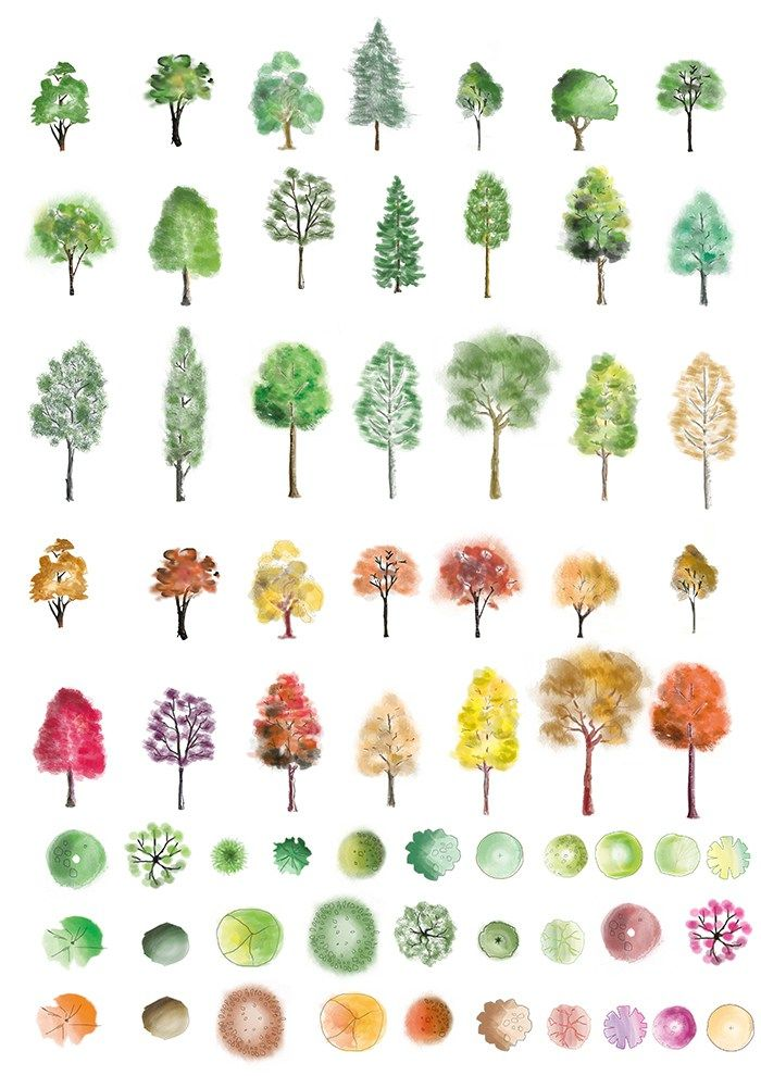 huge set of colour trees in photoshop finished in different artistic ...