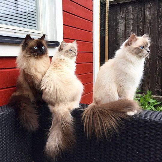 Trois superbes bêtes toute en beauté et en grâce. (CyBeRGaTa - Cats, Memes, New Mexico)