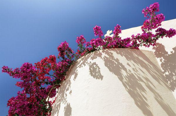 Spring in Paros