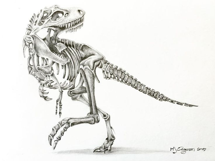17 Best images about Dinosaurs on Pinterest | Artworks ...