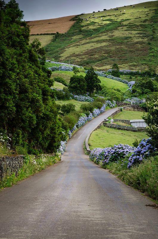 A caminho da Serra de Santa Bárbara - Ilha Terceira, Açores.