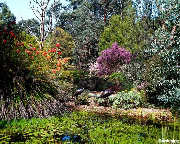 1000 Images About Native Garden Ideas On Pinterest