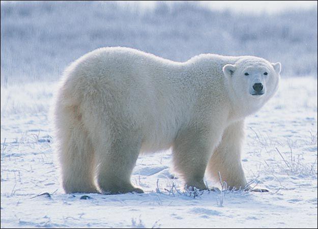 Hug a Polar Bear!