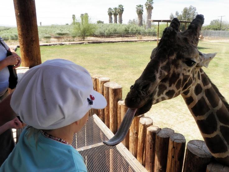 Wildlife world zoo deals