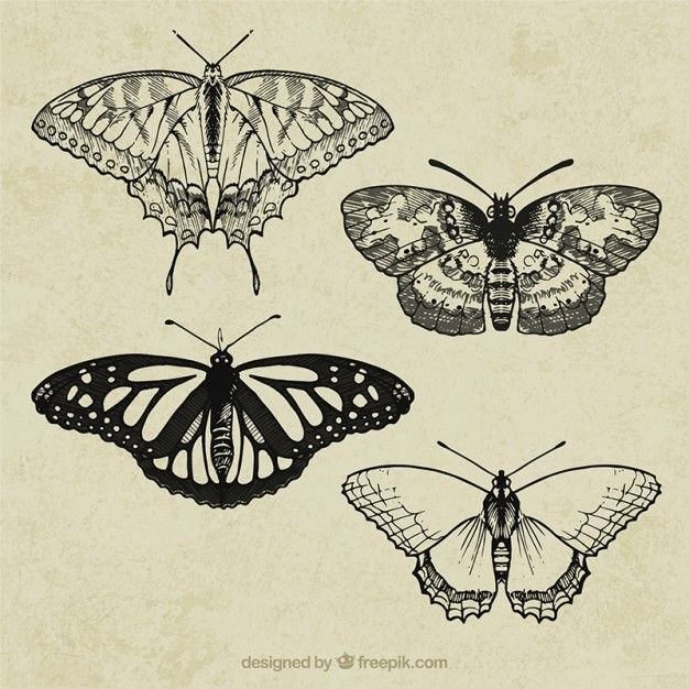 Free vector Retro butterflies #2713
