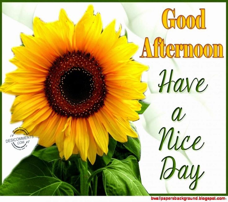 Good afternoon sister and all, have a nice time.