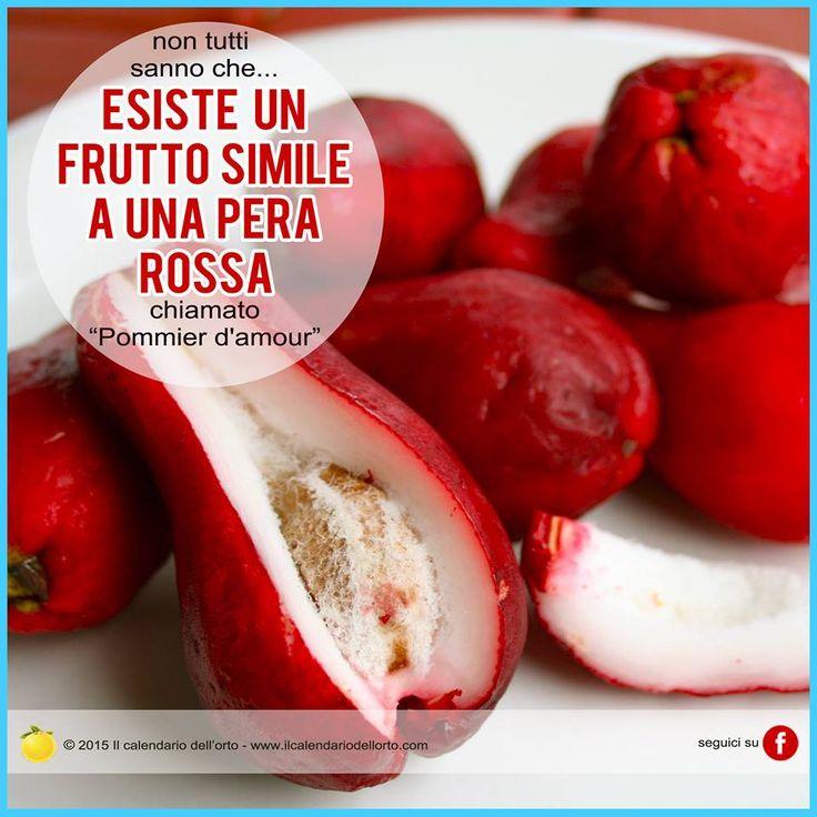 """Esiste un frutto simile a una pera rossa chiamato """"pommier d'amour"""""""