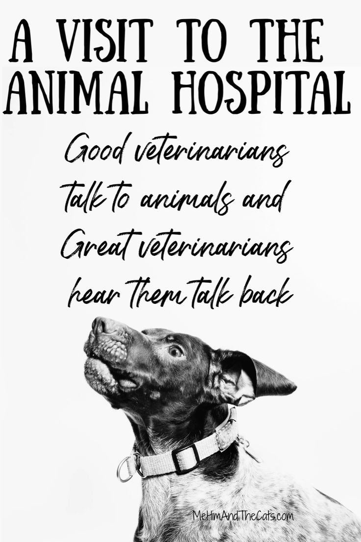 A Trip To The Animal Hospital In 2020 Animal Hospital Veterinary Services Pet Hacks