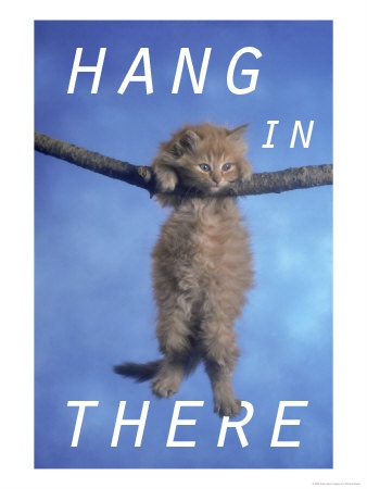Hang in there (kitten)
