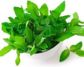 نعناع بلدى و فلفلى أورجانك جودة عالية من شركة روفان للاعشاب الطبيعة Herbs Fresh Mint Leaves Food Processor Recipes