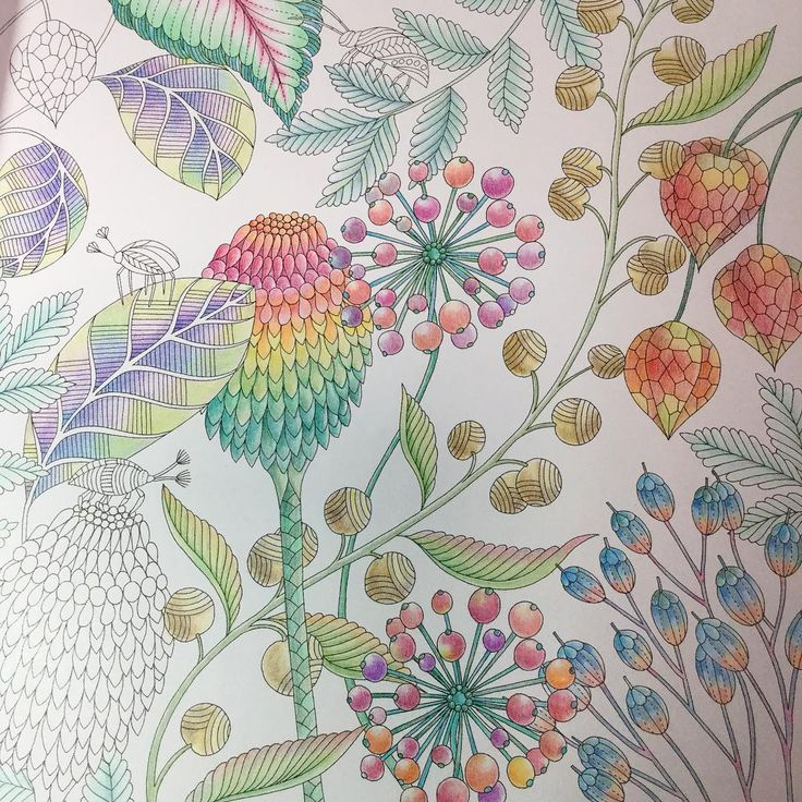 1000 Images About Tropical World Coloring Book On
