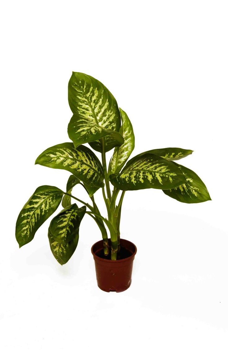 Top 67 Ideas About Office Plants On Pinterest Office