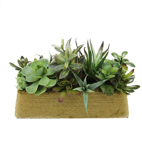 Artificial Mixed Succulent Desk Top Plant in Planter Reviews ❤ liked on Polyvore featuring home, home decor, floral decor, succulent planters, modern home accessories, faux planters, modern planters and modern home decor