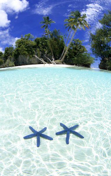 Sea stars, Rock Islands, Palau. #starfish http://www.travelbrochures.org/174/australia/vacationing-in-palau