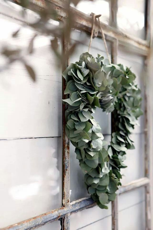 eucalyptus or bay leaf