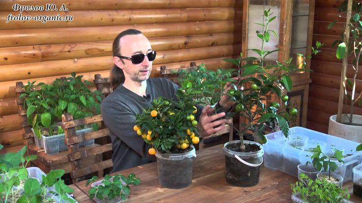 Быстрое выращивание растений. Введение в тему выращивания тропических пл...