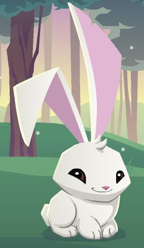 You can buy memberships online at the animal jam shop where you can get diamond codes and all that stuff. Description from animaljamworld.com. I searched for this on bing.com/images