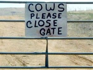 .Instructions to cows that read.