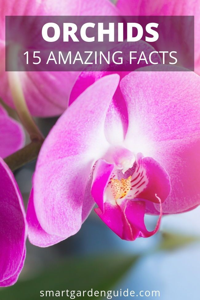 15 Amazing Orchid Facts I M Constantly Learning New And Surprising Things About These Wonderful Plants Learn More At Smartgardeng Orchids Plants Smart Garden