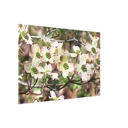 Blush Pink Soft Green Dogwood Tree Blossom Photo Canvas Print - photography gifts diy custom unique special