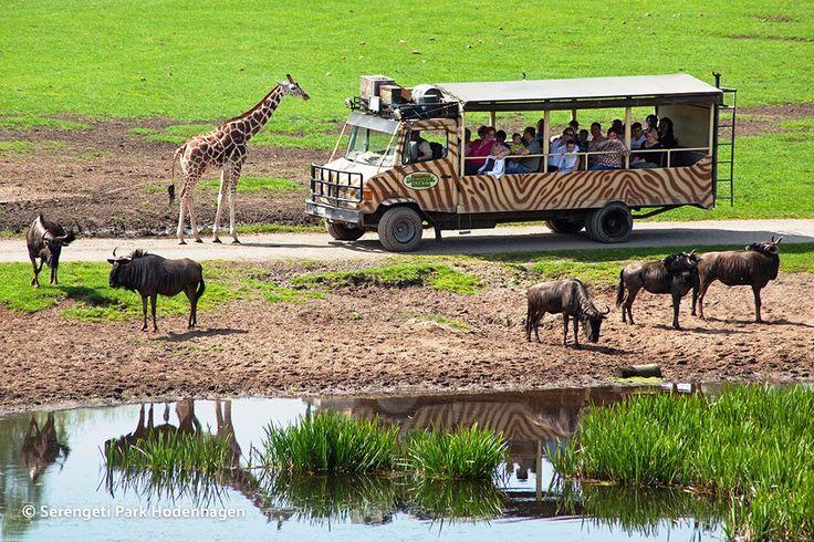 Abenteuer für Groß & Klein im Serengeti Park Hodenhagen: 3 Tage mit Ferienhaus, Frühstück, 2 Mal Eintritt und Bustour ab 155 € - Urlaubsheld | Dein Urlaubsportal