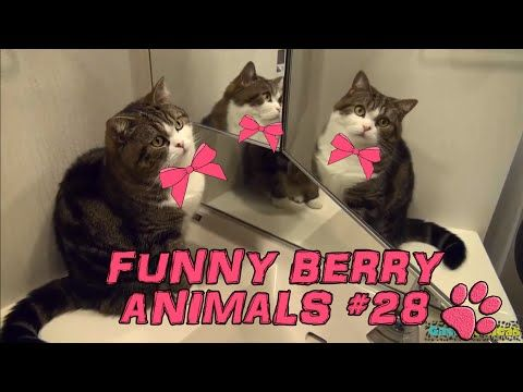 Cute cats, dogs (smart cats) Funny cats 2015 || Funny Berry Animals #28 - YouTube