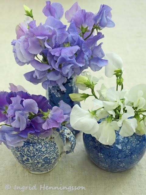 17 Best images about Flora-Sweet Peas, Pansies & Violets on ...