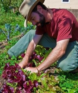 """""""Seattle's New Urban-Ag Models are Sprouting in Friendly Soil: [... A]pproved new legislation that allows urban farmers (meaning anyone) to grow and sell food in all zones and on private property. [...] The city is doing its best to keep up with this groundswell of people, organizations, and businesses growing food in the city while making money, feeding those in need, and finding uses for vacant, but valuable land.[...] Seattle is one of the first cities to really look at their codes[...]"""""""