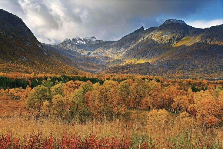 more of Near Gullesfjordbotn, Norway  http://earth66.com/autumn/near-gullesfjordbotn-norway/