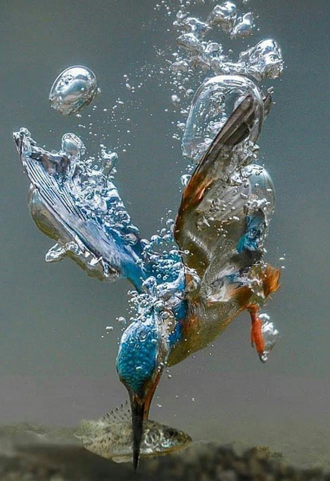 Thoroughly amazing underwater photo of a bird catching a fish. – #Amazing #bird …