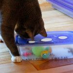puzzles for cats, great idea for humane society or local no kill shelters