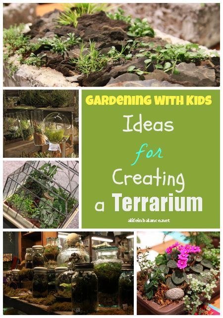 Gardening with kids ideas for creating a terrarium Garden club program ideas