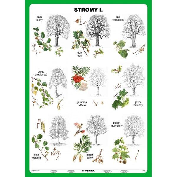 Stromy I. diel