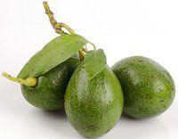 Three Unripe Avocados