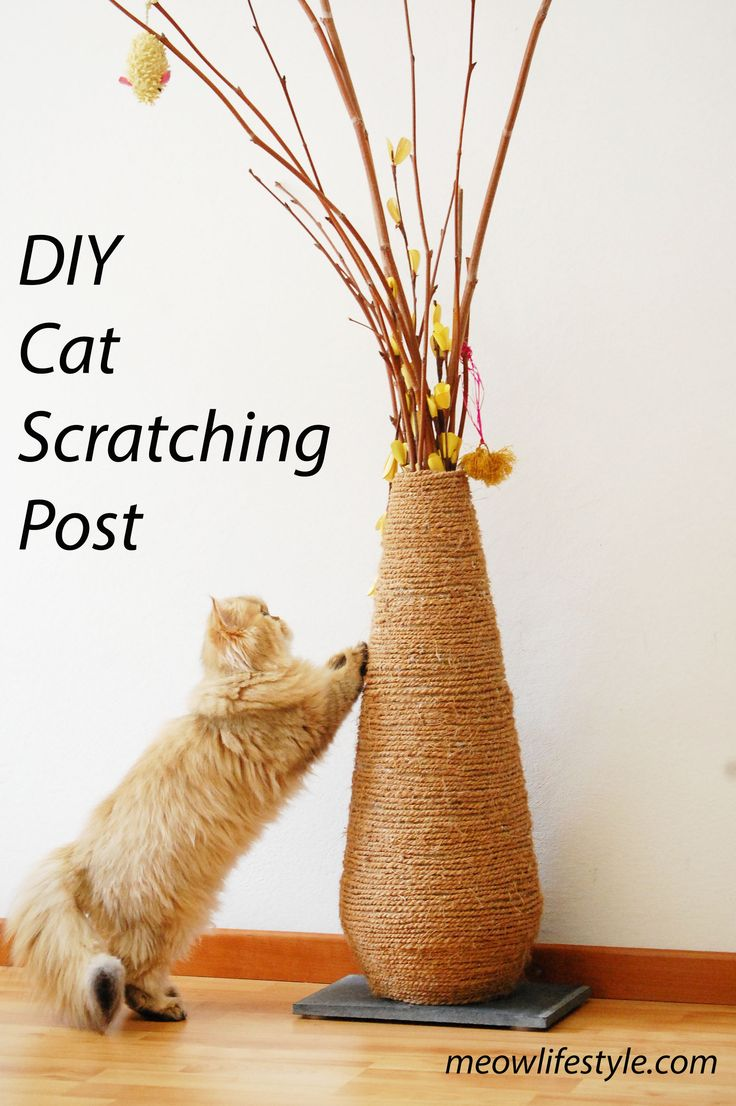 DIY cat scratching post.  Catify your home in style.  http://meowlifestyle.com/diy-vase-scratching-post/