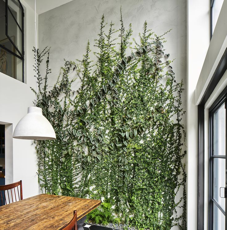 architect visit a dining room wallpapered with climbing vines in brooklyn indoor gardeningindoor plantswall - House Plants Vines
