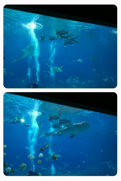 "Some of the divers ""swimming"" with the whale sharks are in the Wounded Warrior program.  Photos by CS Lent"