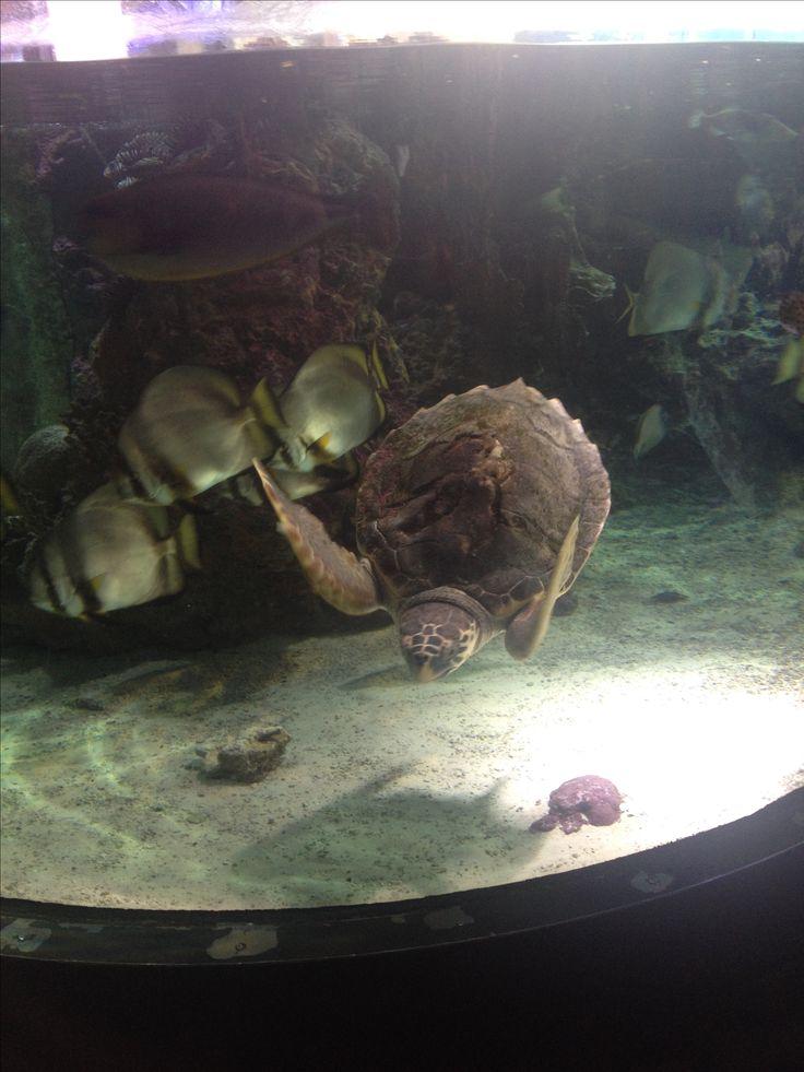 Oltre 25 fantastiche idee su tartaruga acquario su for Acquario di tartarughe
