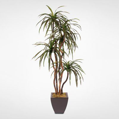 Brayden Studio Silk Floor Yucca Tree in Planter