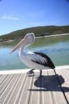 Emu Point Albany Australia