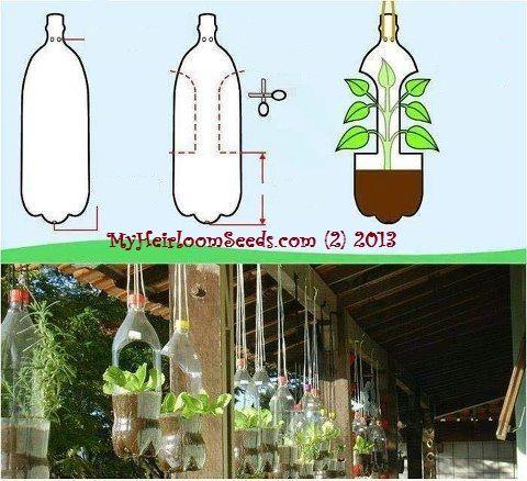 My Heirloom Seeds: Planting in Plastic Bottles