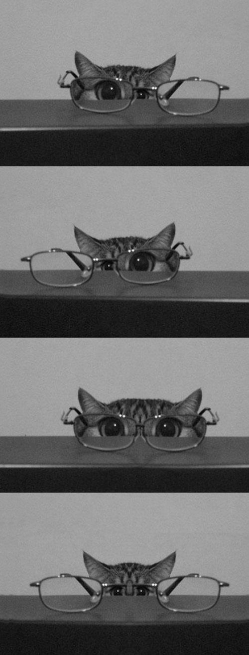 Glasses on animals (adorable)