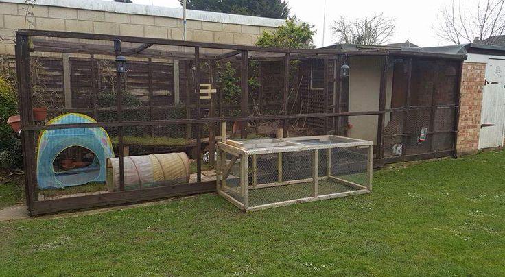 Recinto per conigli soluzione fai da te e pronta all 39 uso for Costruire recinto per cani