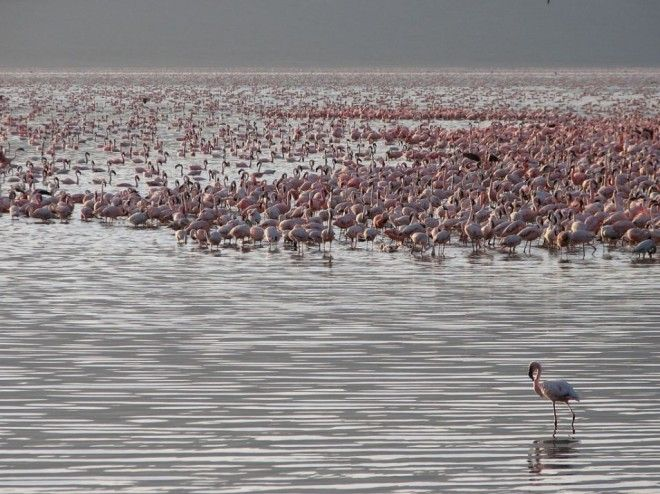 Lake Bogoria, Kenya   1,000,000 Places