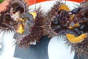 Kina - sea urchin, gold from the Tangaroa