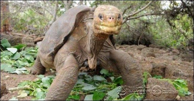 Islamundo está lleno de tortugas. No se por qué… pero me encantan :)