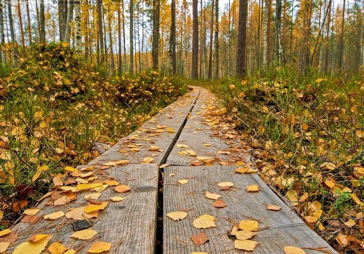 Lokakuu - Leivonmäen kansallispuisto lokakuu ruska pitkospuut koivunlehdet sekametsä syksy