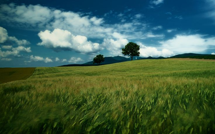 Download Quiet Field Small House Wallpaper Free Wallpapers